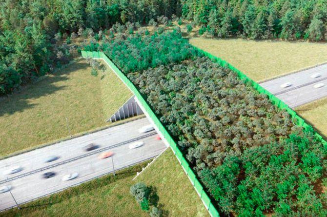 Новый экодук построят на трассе М-1 «Беларусь»