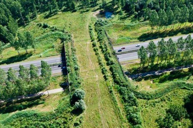 В Солнечногорске построят стометровый экодук