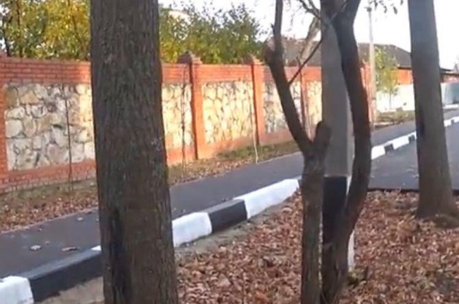 В подмосковном Серпухове построили дорогу с деревьями посередине